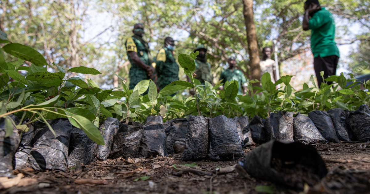 'Action time': Ghanaians plant 5m trees to fight forest depletion